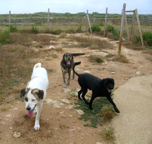 Luca, Zelda and Clotilde - dogs