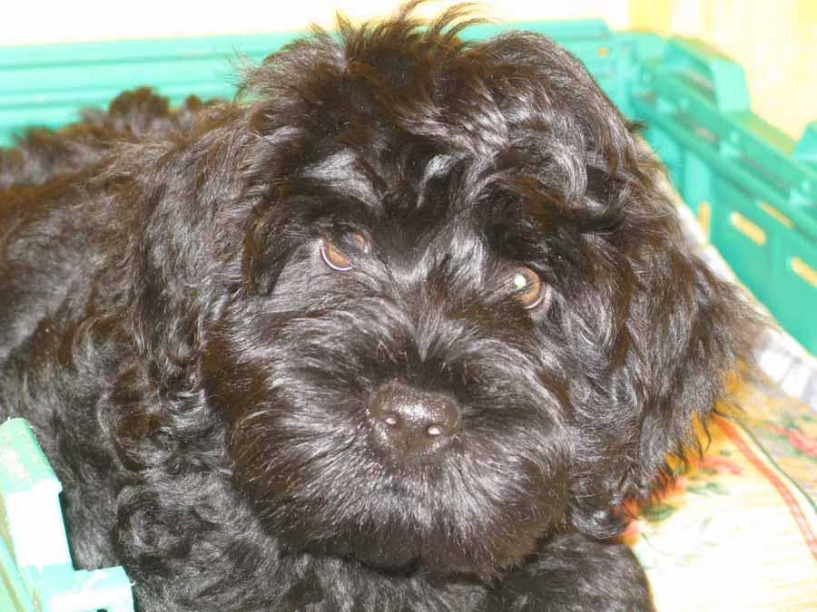 Luca as a pup