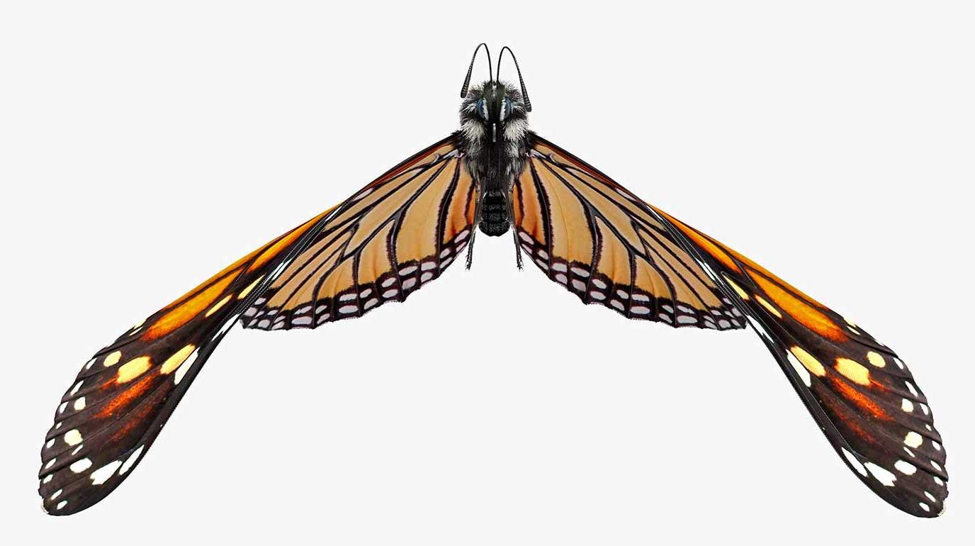 Animated AR Butterfly 3