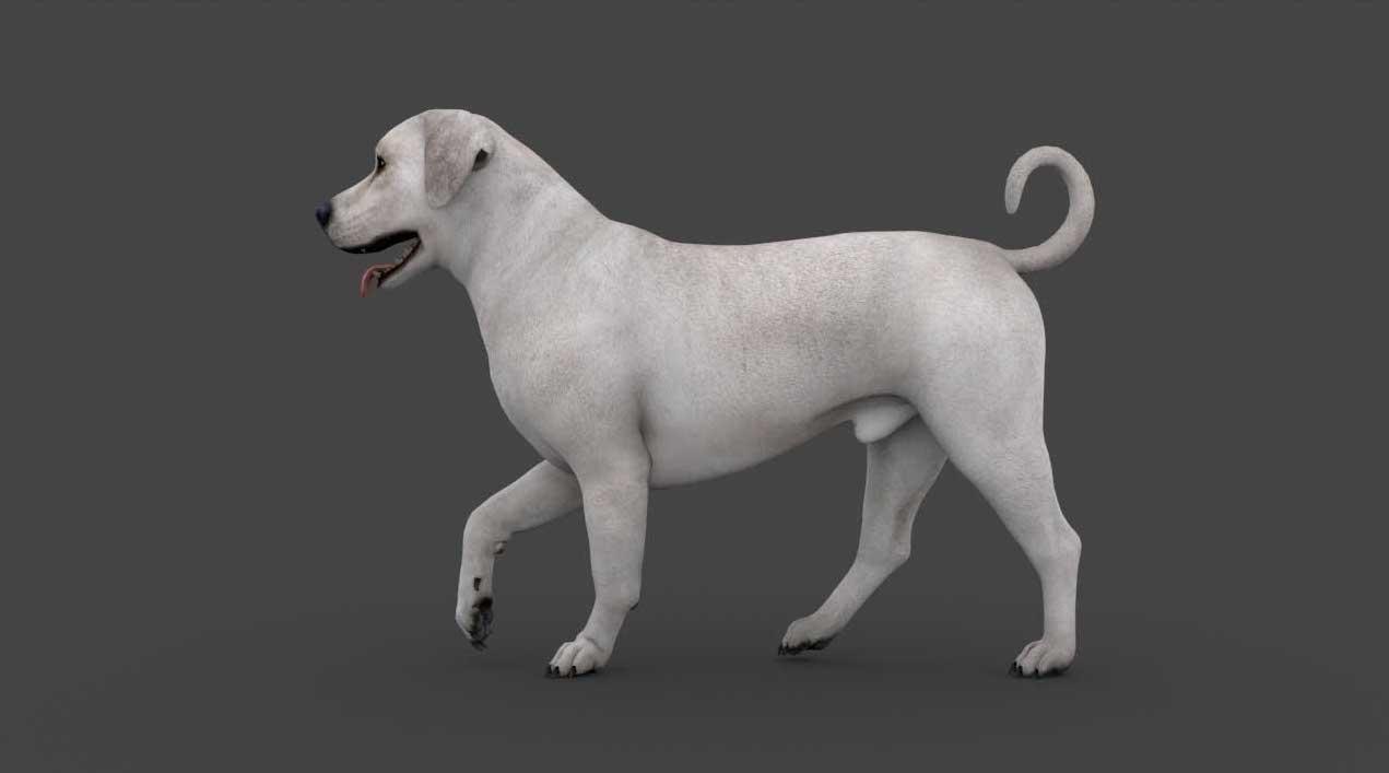 Animated AR Dog 1