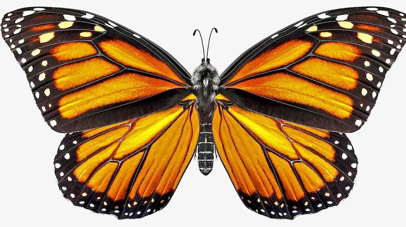 Animated AR Butterfly 5