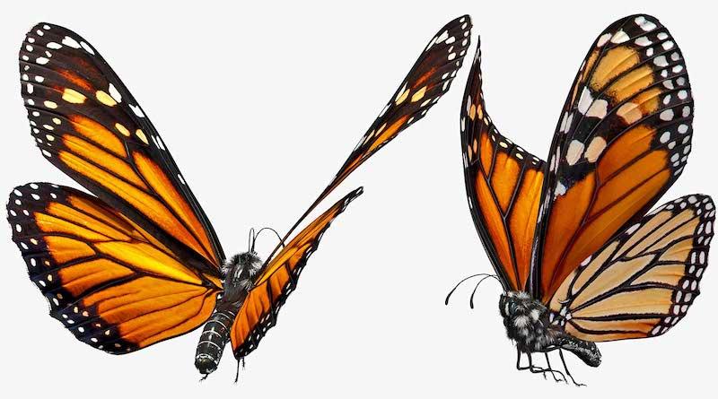Animated AR Butterfly 4