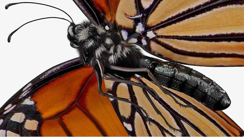 Animated AR Butterfly 2