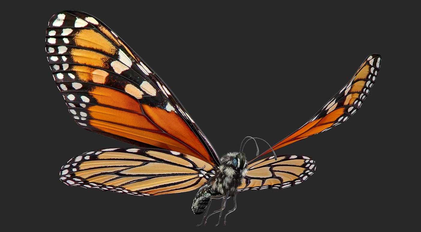 Animated AR Butterfly 1