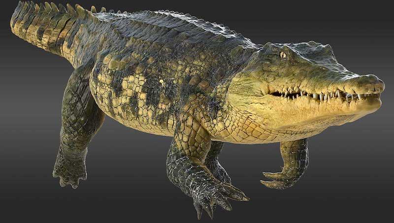 Animated AR Crocodile 3