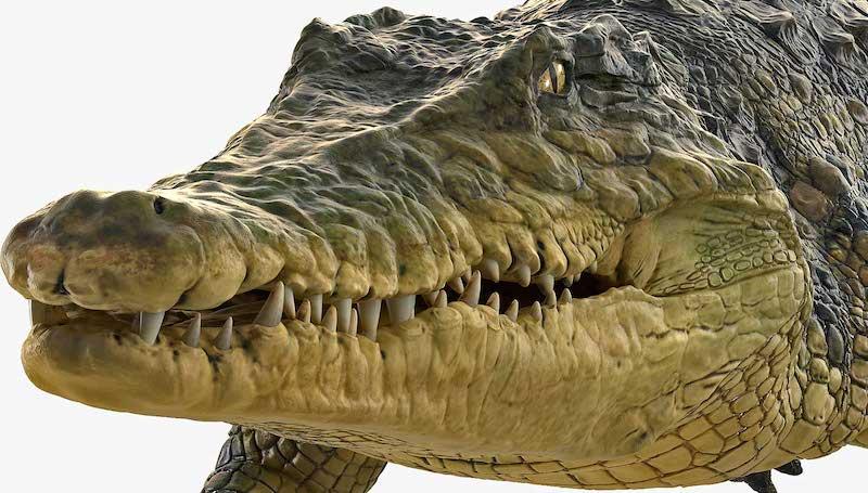 Animated AR Crocodile 2