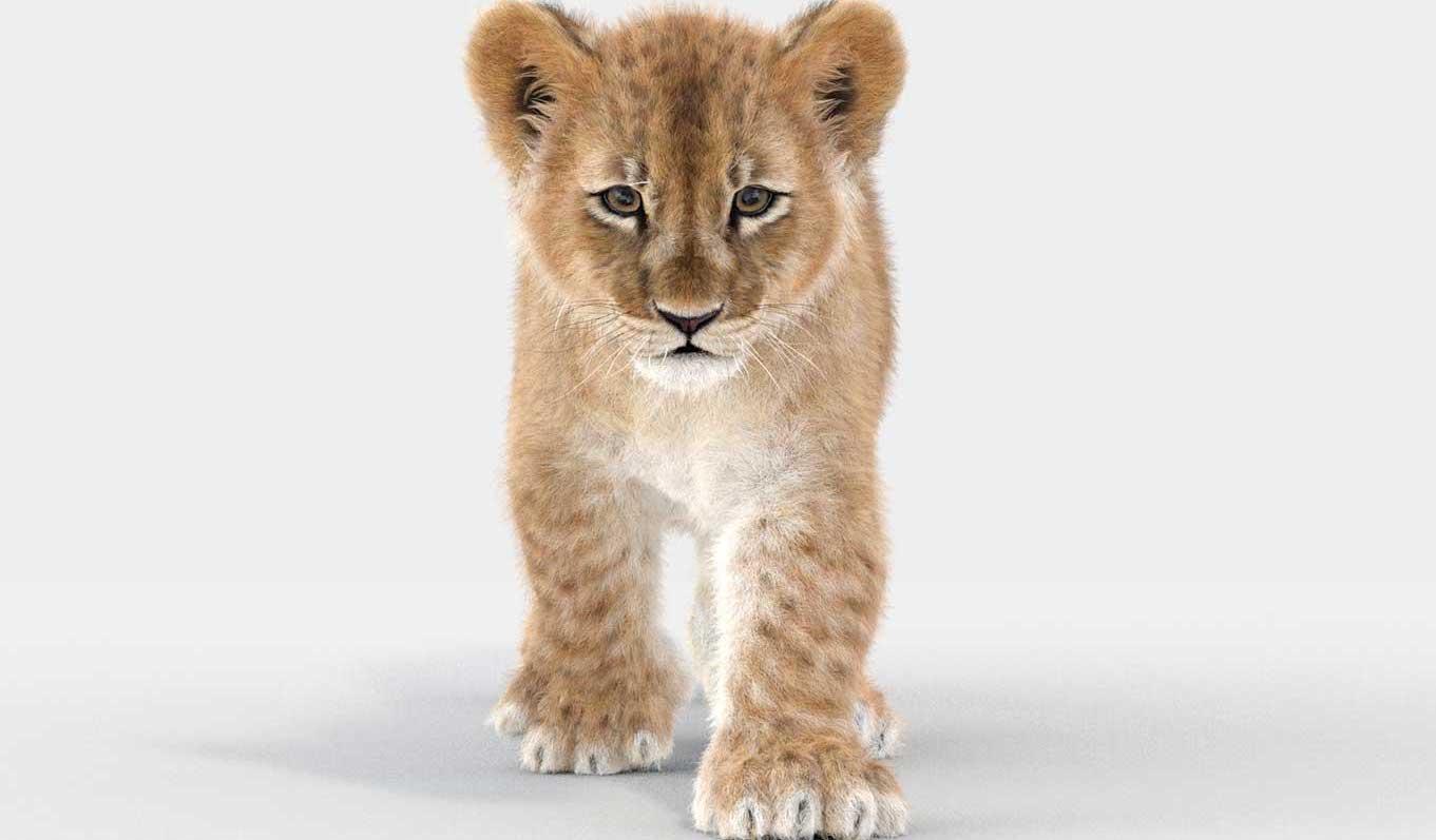 Animated AR  Lion Cub 1