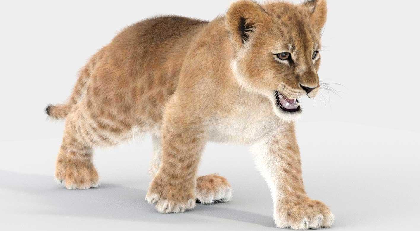 Animated AR  Lion Cub 3