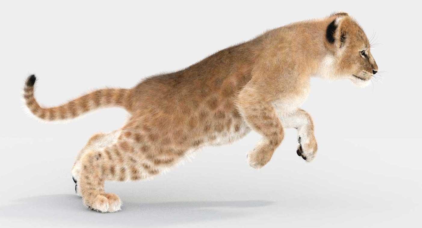Animated AR  Lion Cub 4