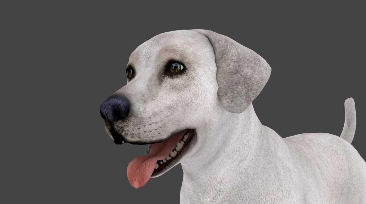 Animated AR Dog 3