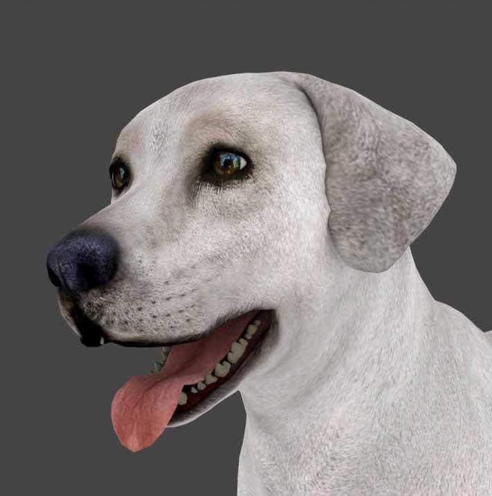 Animated AR Dog 2