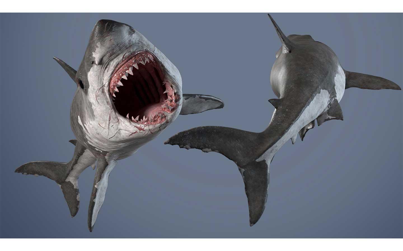 Animated AR Shark 2