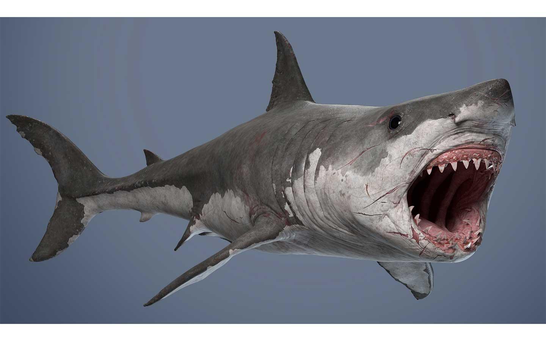 Animated AR Shark 3