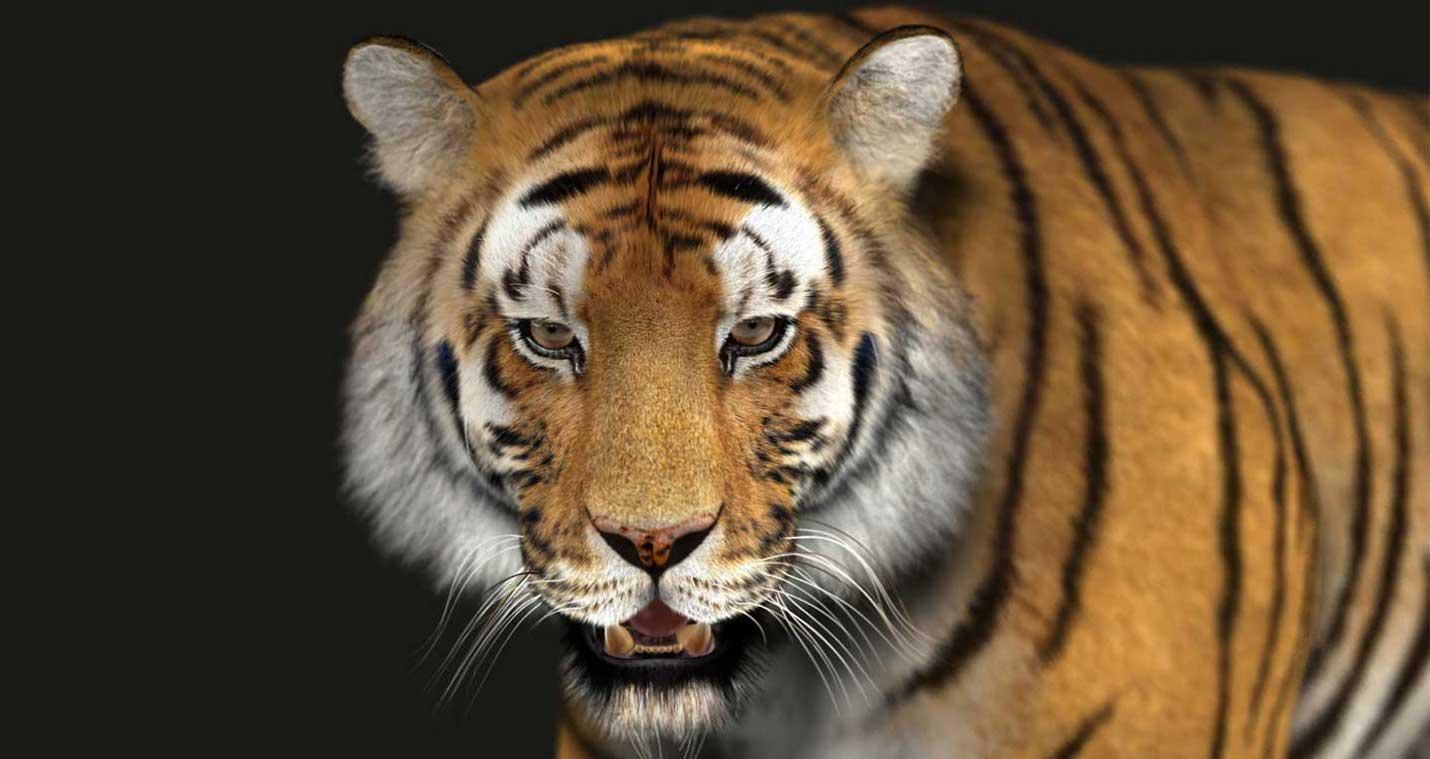 Animated AR Tiger 1