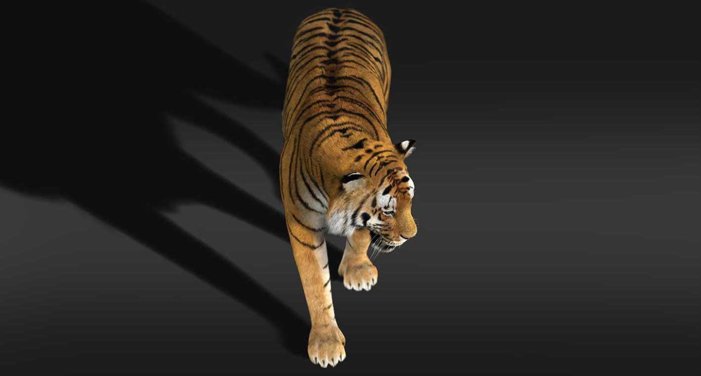 Animated AR Tiger 4