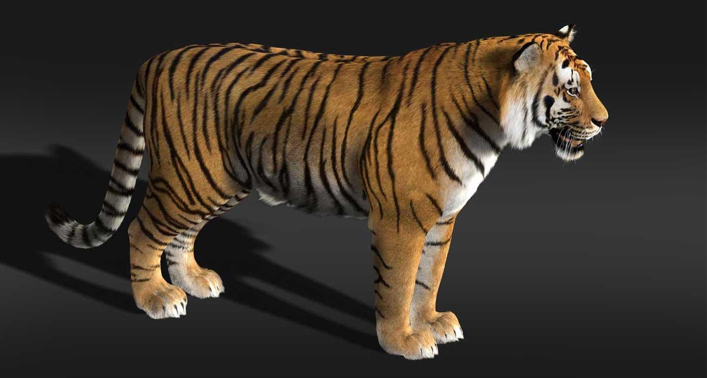 Animated AR Tiger 2