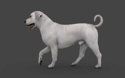 Animated AR Dog
