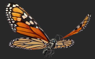 Animated AR Butterfly