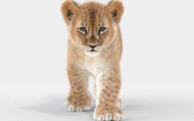 Animated AR  Lion Cub