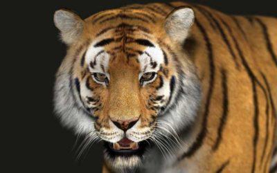 Animated AR Tiger