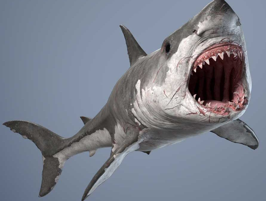 Animated AR Shark
